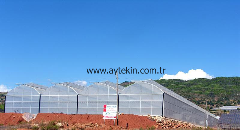 Banana Greenhouse Antalya Turkey