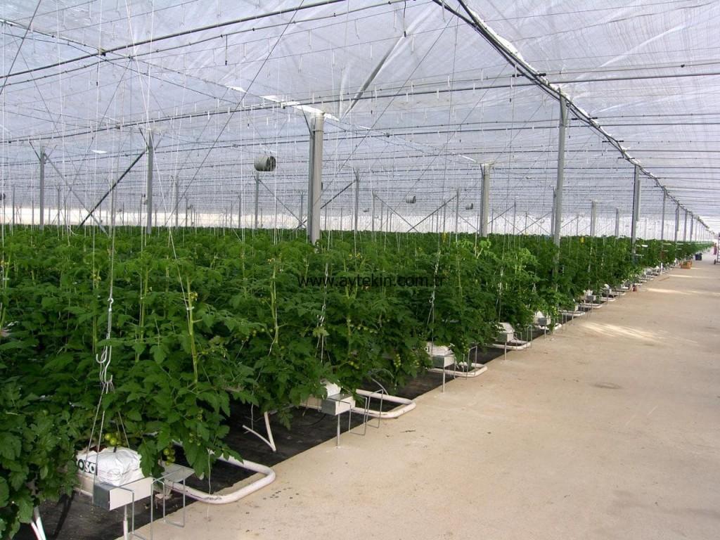 best turkish greenhouse companies