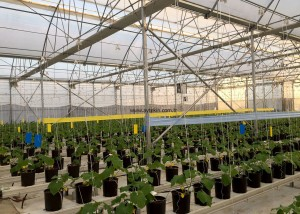flower greenhouse builders