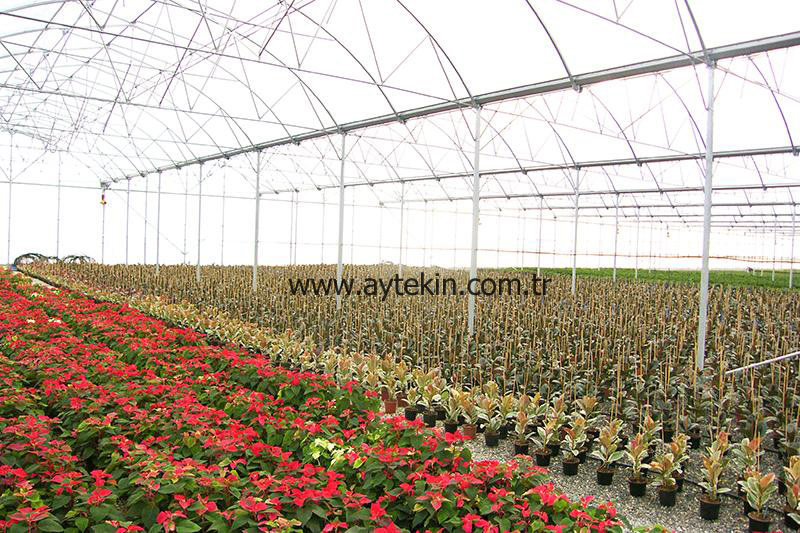 Flower Greenhouse Adana Turkey
