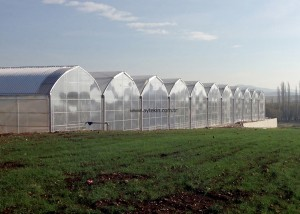 Geothermal Greenhouse