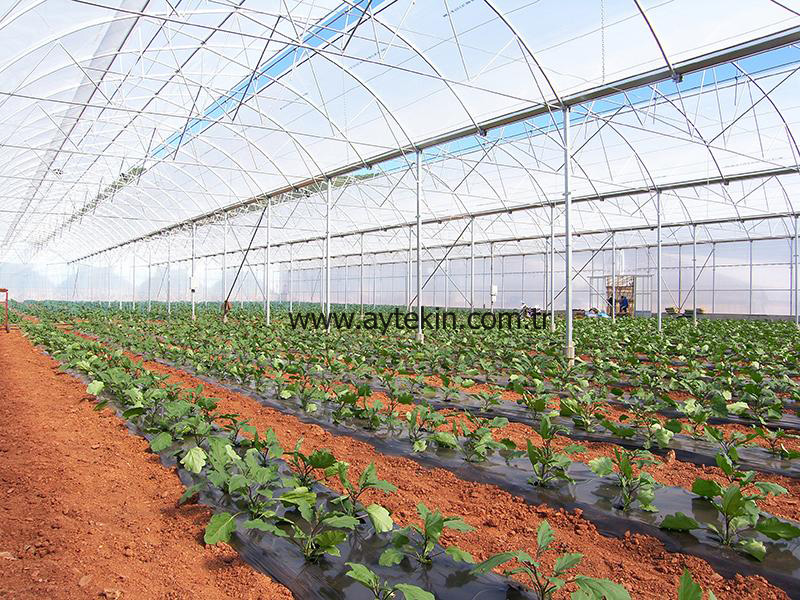 Soil Based Greenhouse Mardin Turkey