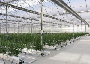 greenhouse hidroponic