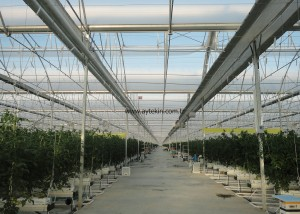 modern tomato greenhouse