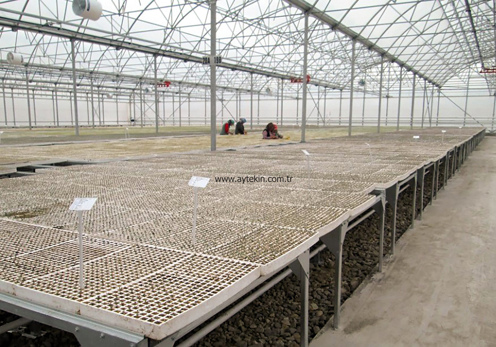 seed grow greenhouse