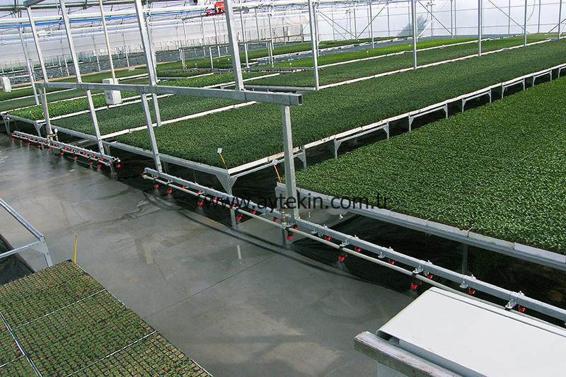 seedeling greenhouse