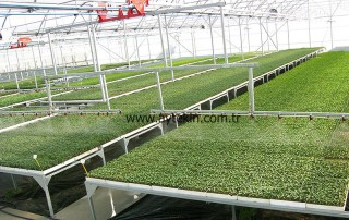 seedling greenhouse